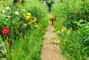 Giverny by STARBlT