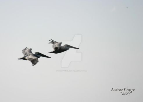 Brown Pelicans in Flight by SanityFound