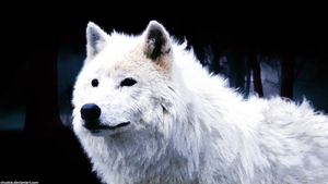 Arctic Wolf Wallpaper 2.0 by xHuskie