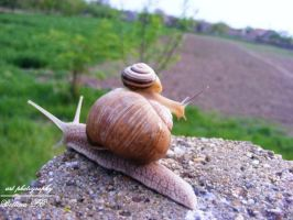 Snails by beth901