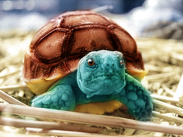Real Life Squirtle by LiAM-S