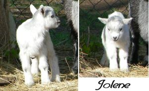 Jolene my Baby Goat by mysticmorning