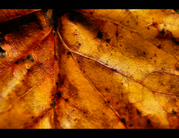 leaf 2 by escaping