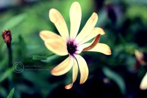 Flower 8 by crystalcleargfx