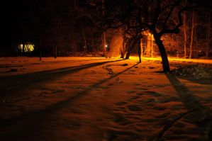 Orchard at Night-2 by NightstreetDreamer