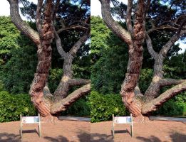 A Kew Gardens Heritage Pine Tree Stereo by aegiandyad