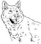 Wolf dog coloring page III by Canis-Simensis