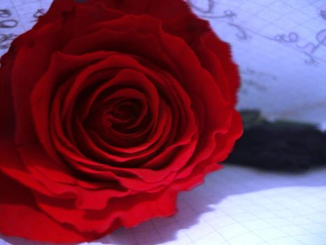 A Red Rose by chocolatedesires