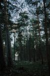 In the woods. by r1anm