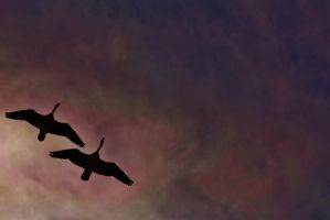 'Oh, To Fly' by KellySeale