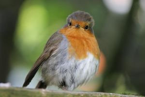 Hi there Robin by hi-there-amy