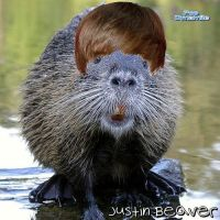 Justen the bever by katfishdaddy