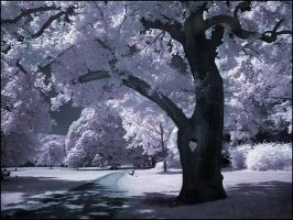 Heart Tree infrared... by MichiLauke