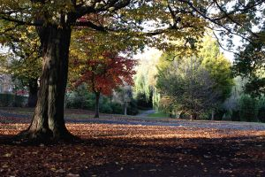 Sydenham Wells Park In Autumn by aegiandyad