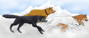 Wolf's Rain by white-wings01