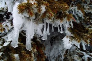 Fingers of winter by MirachRavaia
