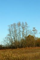 Fall Landscape by LadyRStock