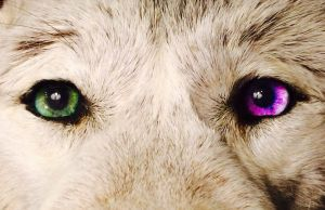 Wolf Headdress Teaser by AlmostAustralian