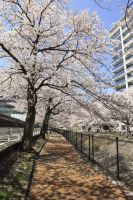 Tama Center Blossoms by Phoenixinthesky