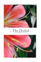 The Orchid by MrsMorzarella