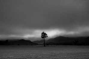 A real lone tree. by lomatic