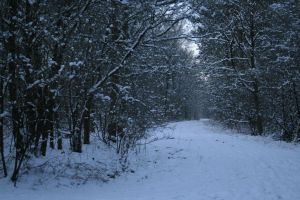 Stock background snow forest VIII by MariKariS