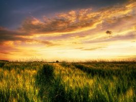 Summer wheatlands pt.IV. by realityDream