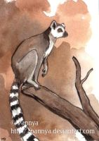 Ringtailed Lemur ACEO by Pannya