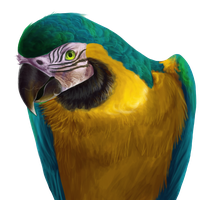 Blue-and-yellow Macaw by Finchwing