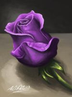Purple Rose by Torvald2000