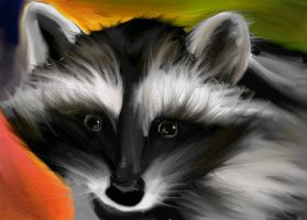 Raccoon Study by Mauxette
