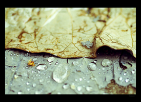 Wet Leaf. by thespook