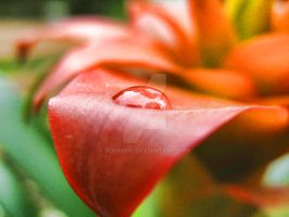 Water Drop by Bourniio
