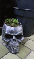 Skull pot by chaosqueen122