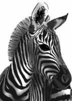Zebra by NyamburaDawn