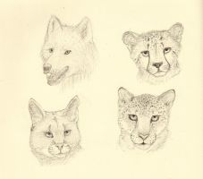 Animal Head Practice by MuniaElena