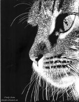Cute Cat: Scratchboard by Aizenfree