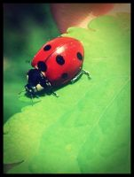 Ladybug by And-I-Walk-Alone