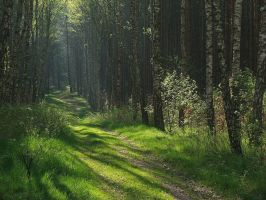 Our Summer Forest by Wirikos