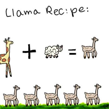 Llama Recipe by super-toria12