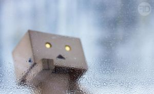 danbo is looking by sp333d1