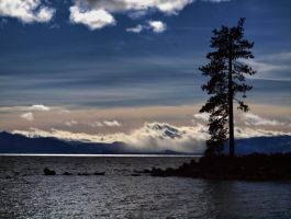 Lone Pine Tree by MartinGollery