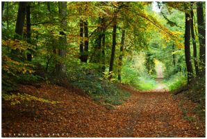 Autumn forest by corius