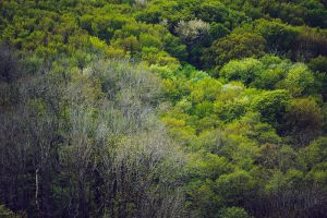 Forest from Above II by Freggoboy