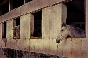 horse, dont cry..... by metataste
