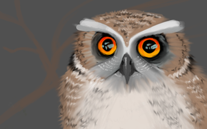Curious owl by Canfas