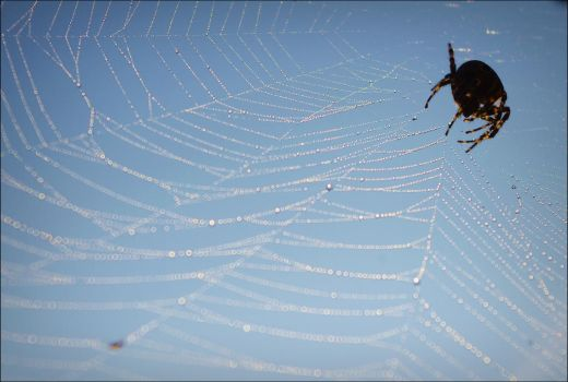 Spiders.web. by Cynamonium