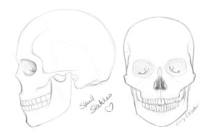 Skull Sketches by DarlingMionette