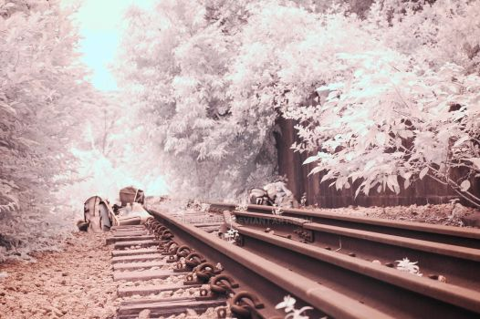 IR photography (3) by zickrawrs