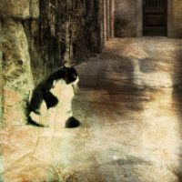 the waiting cat by blacktealover